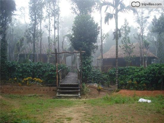 Eco Cottages In Wayanad Amdist Coffee Plantations, Kerala ...